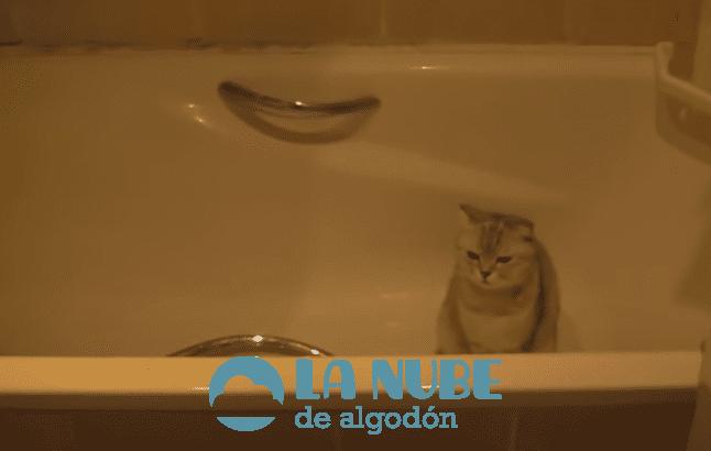 gato bano1