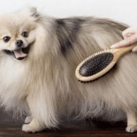 cepillar perro