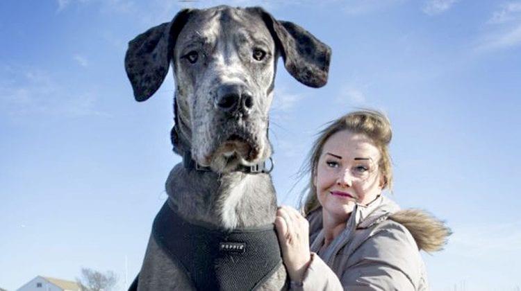 Muere Freddy el perro de mas de dos metros de altura