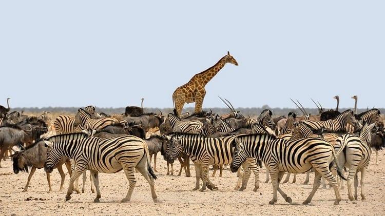 Curiosidades de animales que seguro que no conoces 1
