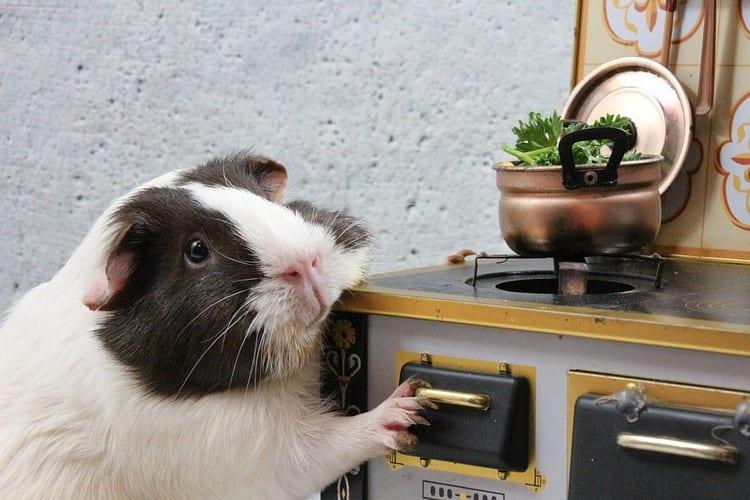 Denia ya tiene sus restaurantes con menu para mascotas